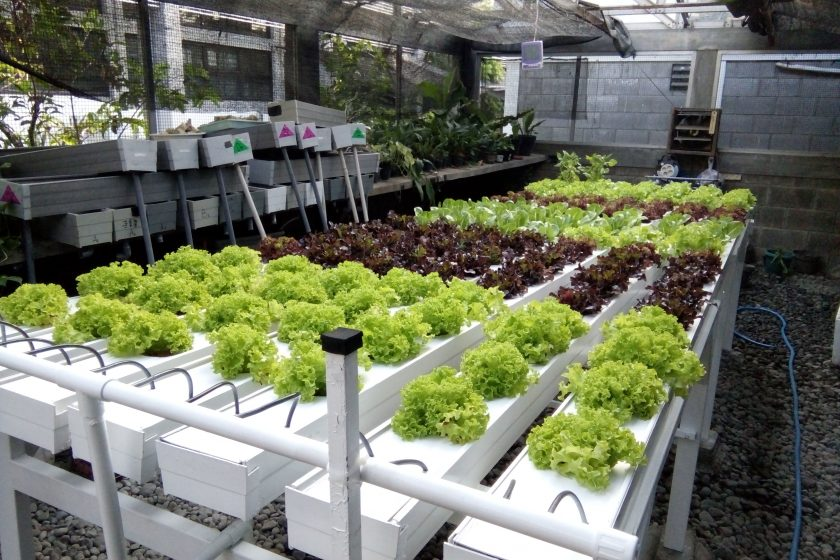 LABORATORIUM MULTIMEDIA GREEN HOUSE